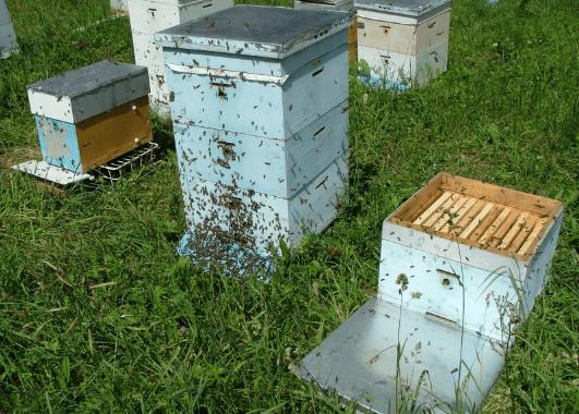 пчелиные ульи в деревне