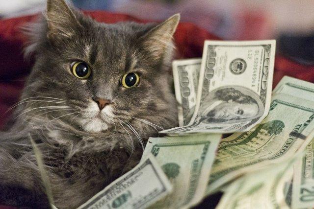 Где взять деньги на время карантина